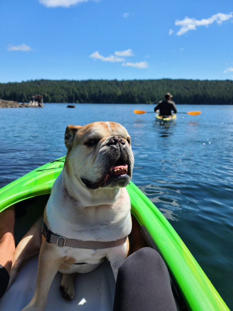 a bull dog sits in a kayak out on the water